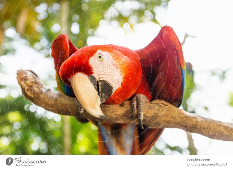Nature Vacation & Travel Summer Animal Playing Tourism Bird Exotic Animal face Parrots Macaw Honduras
