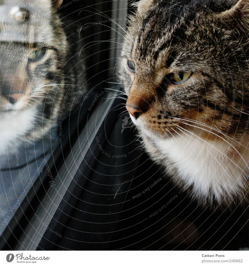 Not alone Animal Pet Cat Animal face Observe Dark Uniqueness Near Curiosity Cute Domestic cat Reflection Window Pelt Glass Window pane Colour photo Day