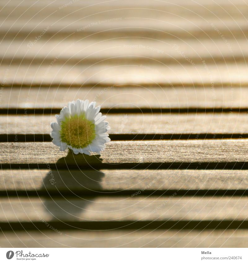 Nature Beautiful Plant Summer Flower Spring Wood Happy Blossom Line Lie Natural Table Transience Blossoming Fragrance