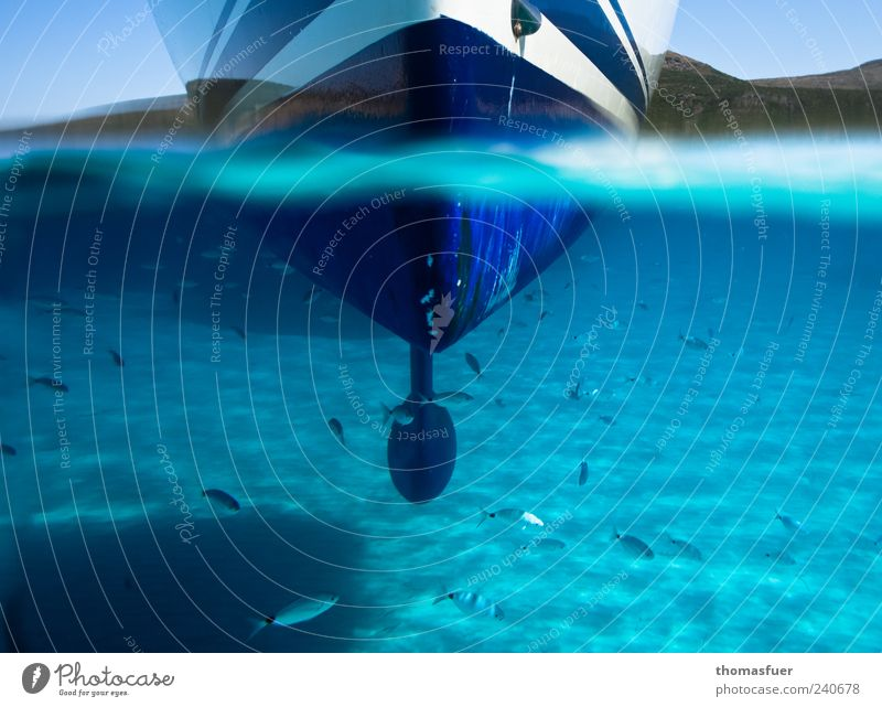 Blue Water Vacation & Travel Summer Ocean Swimming & Bathing Contentment Glittering Esthetic Watercraft Perspective Fish Beautiful weather Curiosity Dive Bay