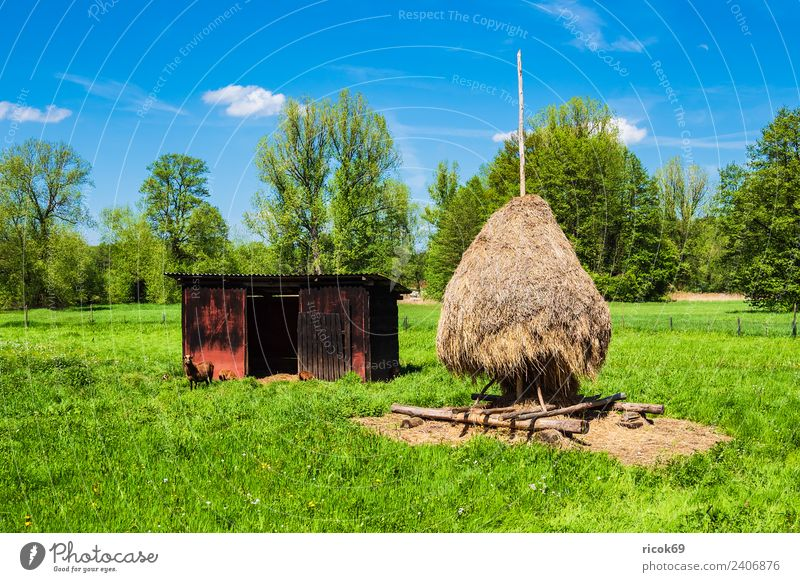 Haystack in the Spreewald near Lehde Relaxation Vacation & Travel Tourism Agriculture Forestry Nature Landscape Clouds Tree Meadow Hut Tourist Attraction Blue