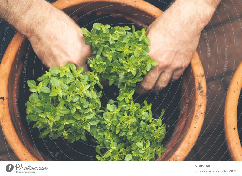 Gardening in spring Healthy Healthy Eating Well-being Contentment Senses Relaxation Human being Masculine Hand Nature Plant Agricultural crop Pot plant Fresh