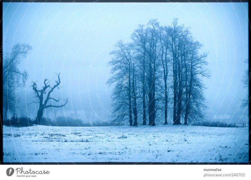 Dull view Lifestyle Far-off places Environment Nature Landscape Winter Fog Ice Frost Snow Tree Park Meadow Forest River bank Relaxation Dream Sadness Dark Cold