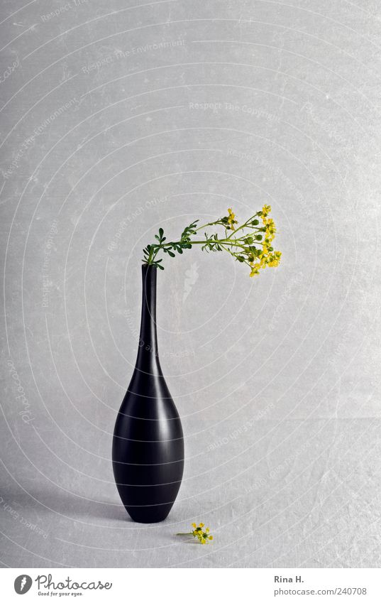 Old Plant Black Yellow Blossom Style Art Lifestyle Living or residing Elegant Decoration Esthetic Simple Blossoming Transience Still Life
