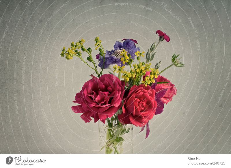 SummerFlowersBunch II Lifestyle Style Living or residing Rose Blossom Blossoming Esthetic Happiness Beautiful Multicoloured Bouquet Flowering plants Still Life