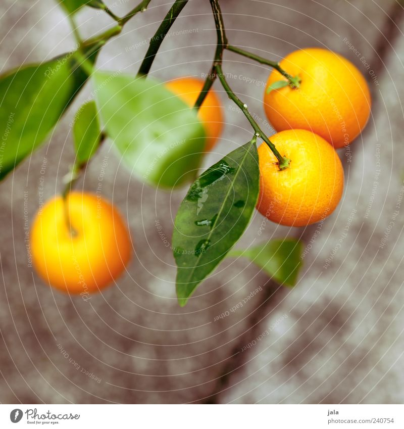 Nature Beautiful Tree Plant Food Blossom Orange Fruit Orange Agricultural crop Adornment