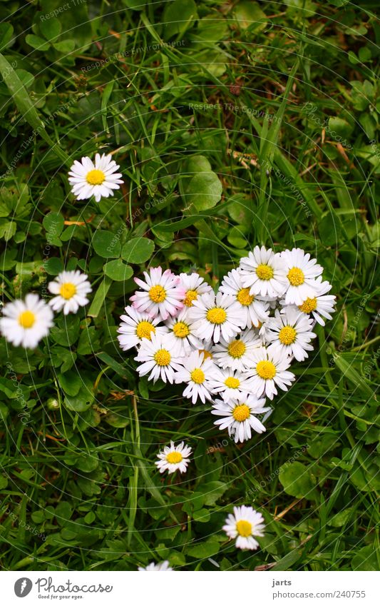 ...from the heart... Plant Beautiful weather Flower Grass Meadow Heart Natural Life Nature flower heart Valentine's Day Salutation Congratulations Daisy