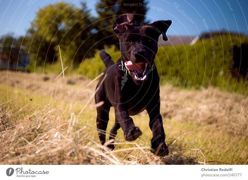 Dog Sky Nature Summer Animal Landscape Meadow Playing Grass Happy Jump Field Wild Happiness Infinity Animal face