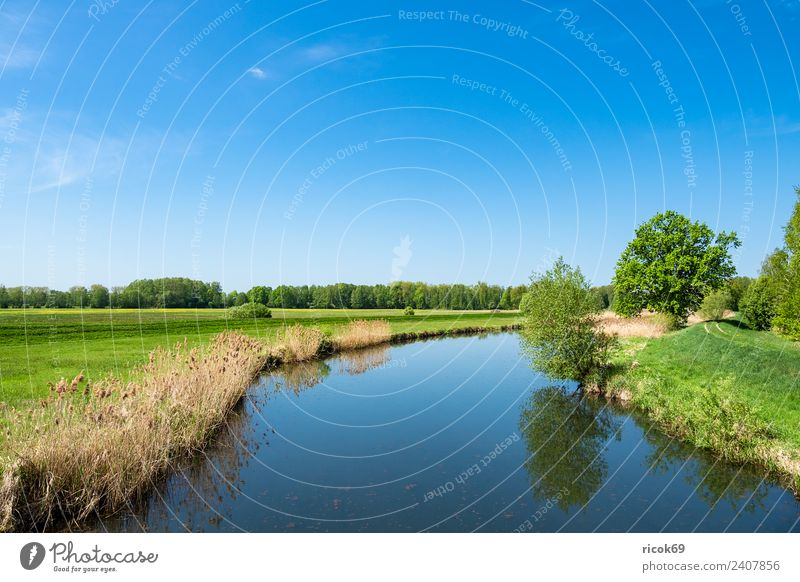 Landscape in the Spreewald near Lübbenau Relaxation Vacation & Travel Tourism Nature Water Clouds Spring Tree Forest River Tourist Attraction Blue Green Romance