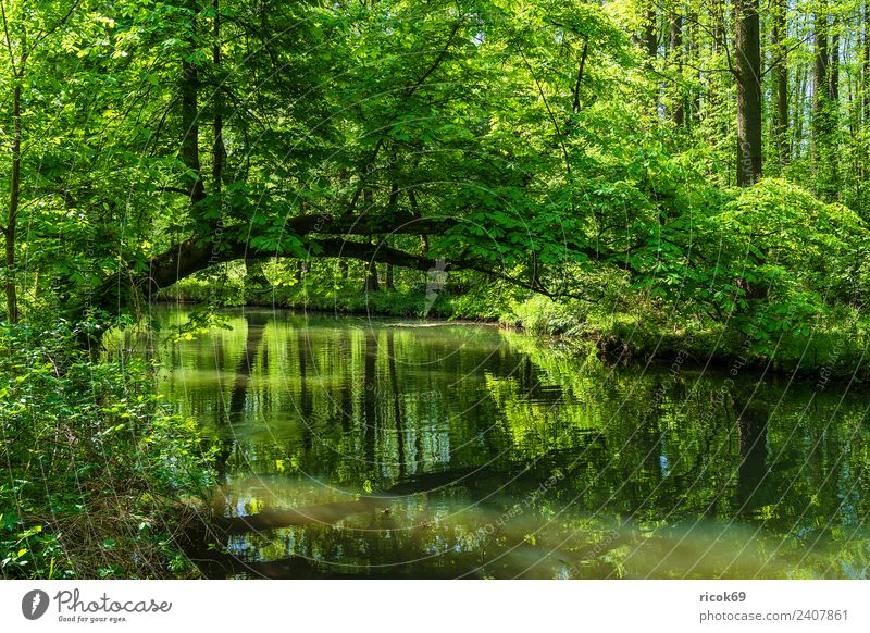 Landscape in the Spreewald near Lübbenau Relaxation Vacation & Travel Tourism Nature Water Spring Tree Forest River Tourist Attraction Green Romance Idyll