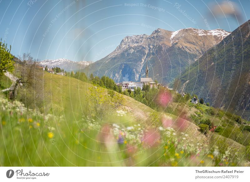 SENT Nature Landscape Blue Green Violet Pink sentinel Engadine Valley Mountain Church spire Meadow Spring Blossoming Mountain meadow Vantage point