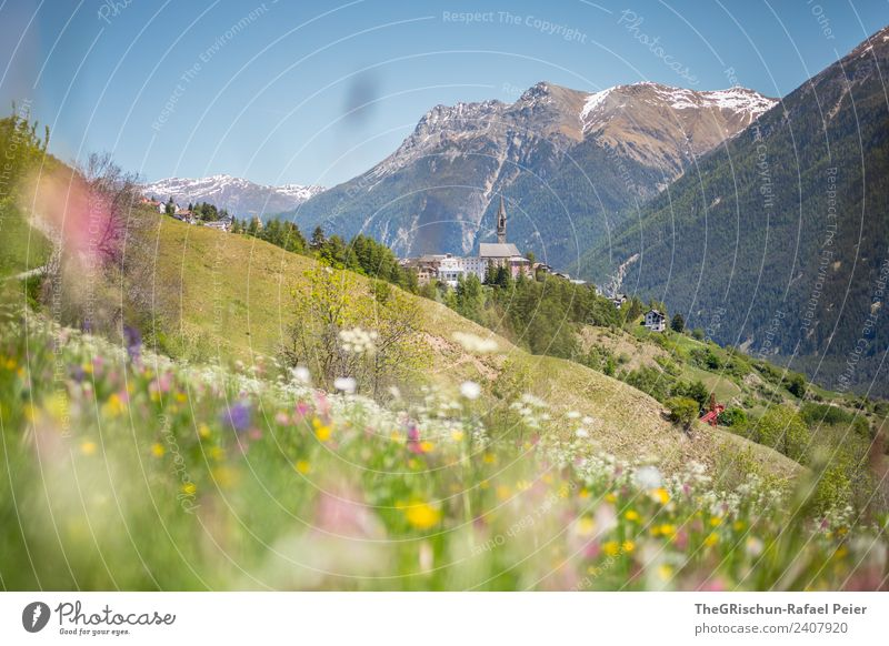 SENT Nature Landscape Plant Brown Green Violet Pink White Mountain Church spire Village Engadine Valley sentinel Forest Meadow Mountain meadow Spring Hill