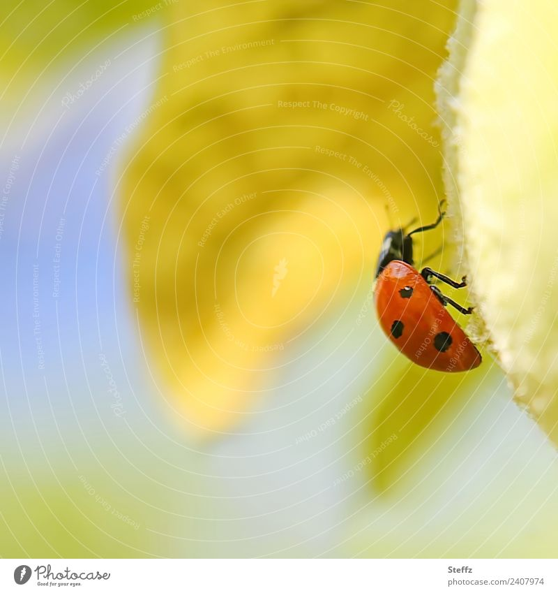 I am walking Nature Autumn Quince Quince leaf Garden Fruit garden Animal Beetle Ladybird Insect Legs Animal foot 1 Going Crawl Small Beautiful Yellow Red