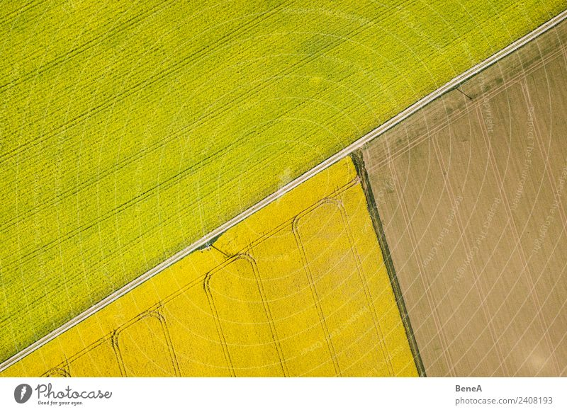Yellow rape fields, fields and field paths from above Grain Cycling tour Summer Gardening Agriculture Forestry Energy industry Nature Landscape Plant
