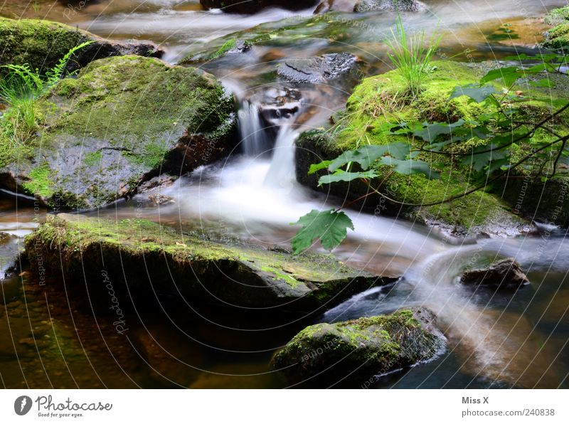 Small stream Nature Water Bushes Moss Fern Forest Brook Waterfall Dark Cold Wet Mountain stream Stone Colour photo Exterior shot Deserted Long exposure
