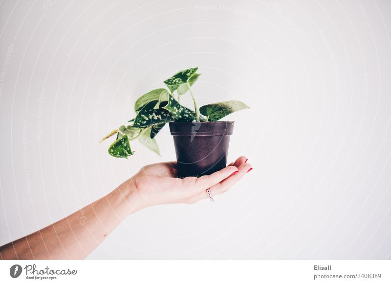 Potted Plant Environment Nature Elements Earth Garden Houseplant potted Green Hand Hold Vine Gardening Colour photo Copy Space right Copy Space top