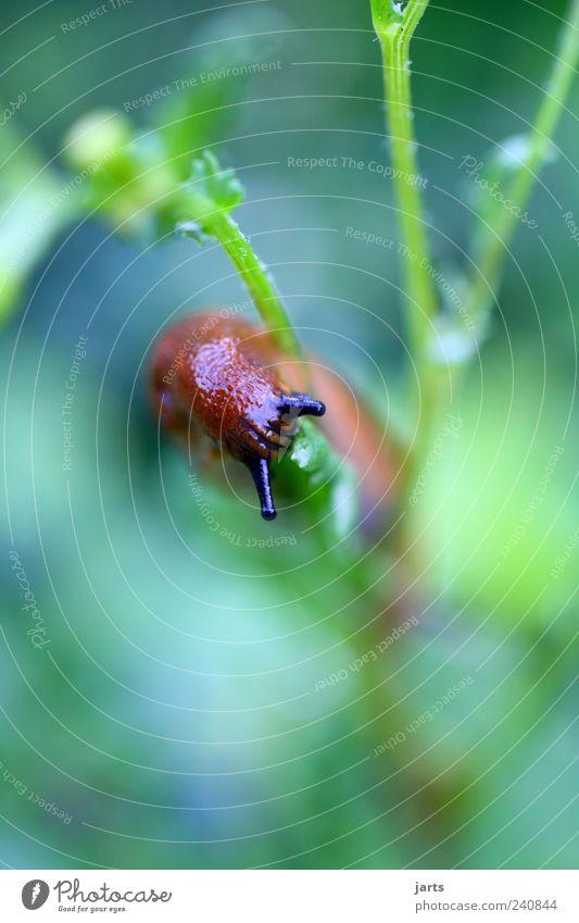Nature Plant Animal Garden Wild animal Snail Feeler Foliage plant