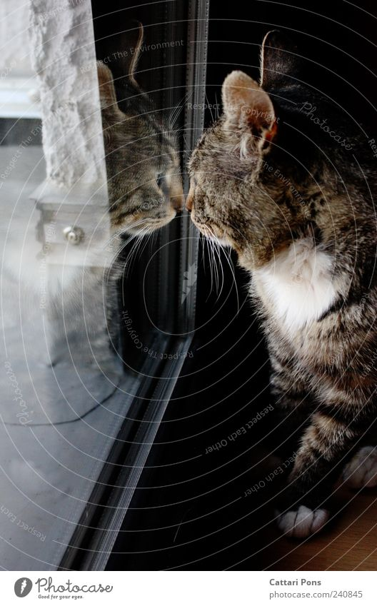 Cat Animal Loneliness Window Dark Sit Stand Cute Observe Individual Curiosity Touch Near Discover Pet Domestic cat