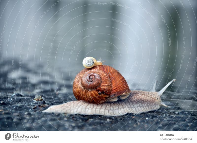 Nature Water Beautiful Summer Animal Spring Wild animal Wet Beautiful weather Asphalt Snail Puddle Snail shell Reflection Evening Hitchhike