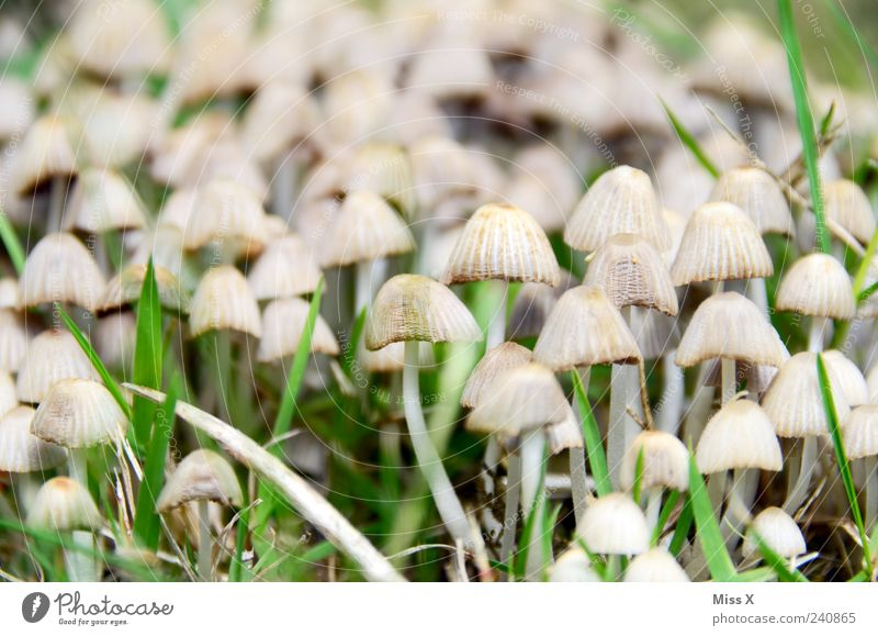 a great many Grass Growth Small Nature Mushroom Poison Many Colour photo Subdued colour Exterior shot Close-up Pattern Deserted Shallow depth of field