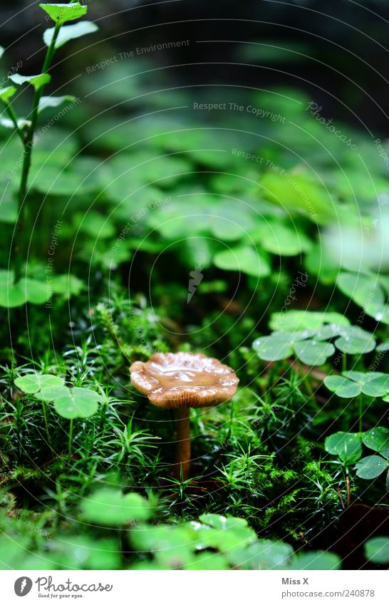 forest dwellers Environment Nature Drops of water Summer Autumn Rain Plant Grass Moss Growth Small Wet Happy Four-leafed clover Good luck charm Clover Mushroom