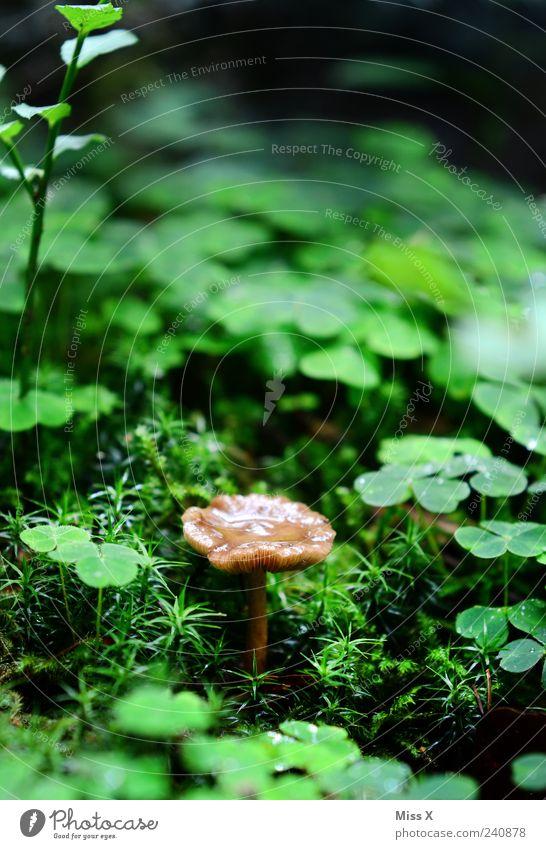Nature Plant Summer Environment Autumn Grass Happy Small Rain Wet Growth Drops of water Mushroom Moss Cloverleaf Woodground