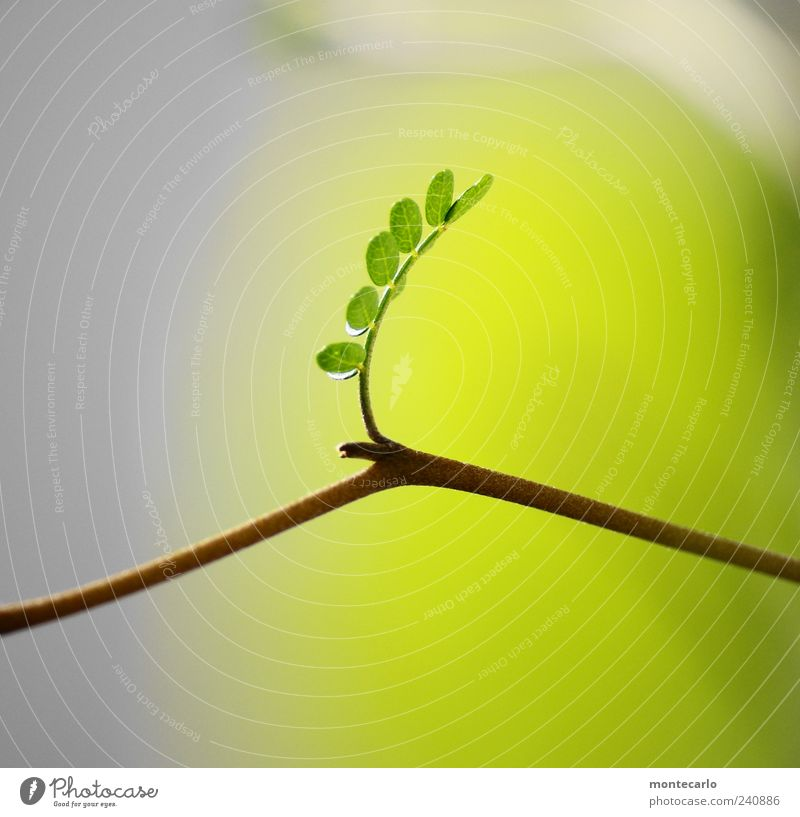 Tree Plant Summer Leaf Esthetic Twig Exotic Foliage plant Light green