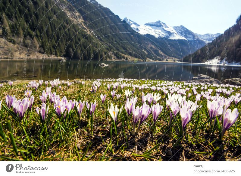 Nature Plant Water Landscape Calm Mountain Life Spring Natural Small Exceptional Lake Together Trip Illuminate Joie de vivre (Vitality)