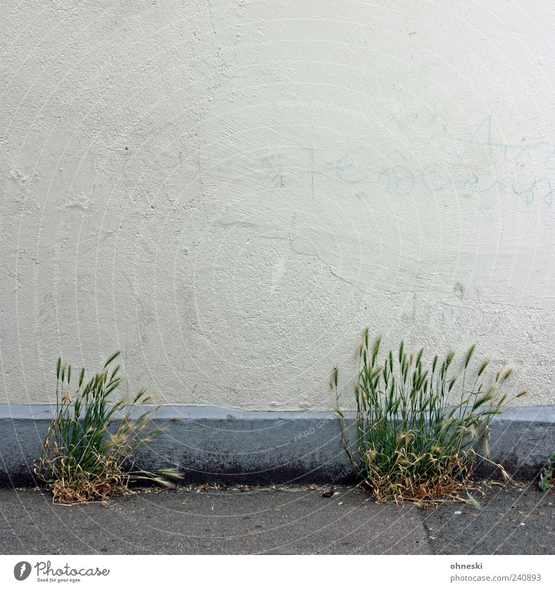 Plant House (Residential Structure) Life Wall (building) Wall (barrier) Building Facade Hope Growth Grain Manmade structures Bleak Agricultural crop Vigor