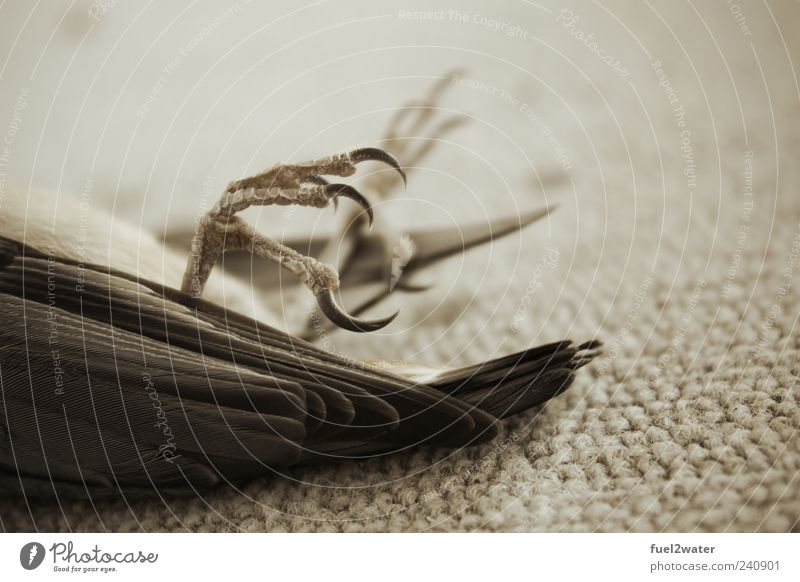 Animal Death Bird Wild animal Esthetic Feather Claw Dead animal