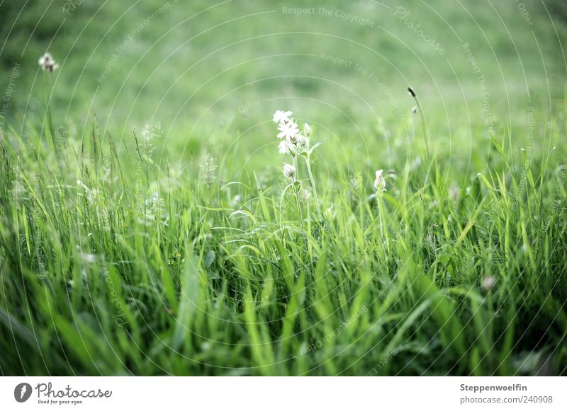 meadow flower Nature Landscape Plant Beautiful weather Grass Blossom Meadow Breathe Blossoming Fragrance Discover Relaxation To enjoy Growth Green White Flower