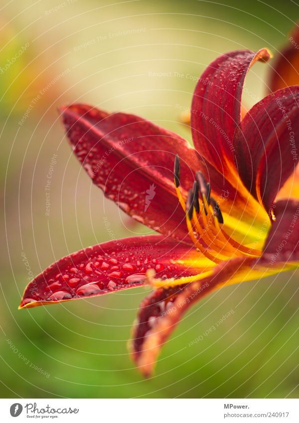 Water Green Red Plant Leaf Blossom Orange Drops of water Exotic Tropical Portrait format