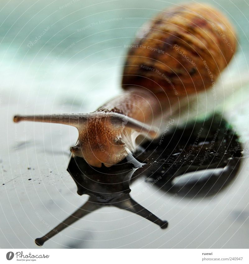 Sn@il_1 Animal Water Drops of water Snail Glass Wet Soft Blue Brown Green Crawl Mucus Slimy Mollusk Feeler Eyes Snail shell Colour photo Exterior shot Close-up