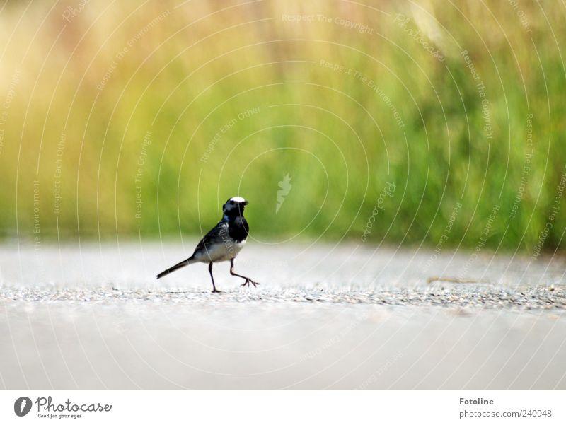 Nature Plant Animal Environment Small Bright Bird Wild animal Natural Walking Elements Wing Asphalt