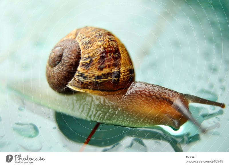 Sn@il_2 Animal Snail Mollusk Snail shell 1 Glass Wet Slimy Blue Brown Multicoloured Green Finish line Crawl Colour photo Exterior shot Close-up Detail Day Light