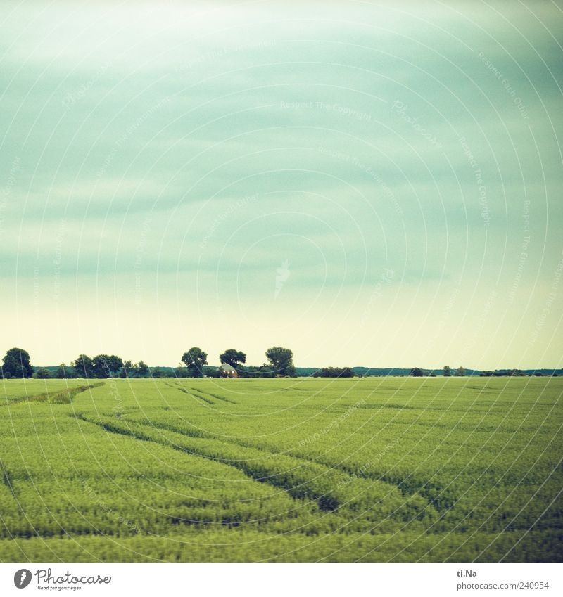 Blue Green Beautiful Plant Summer Environment Spring Bright Weather Field Growth Tracks Agricultural crop