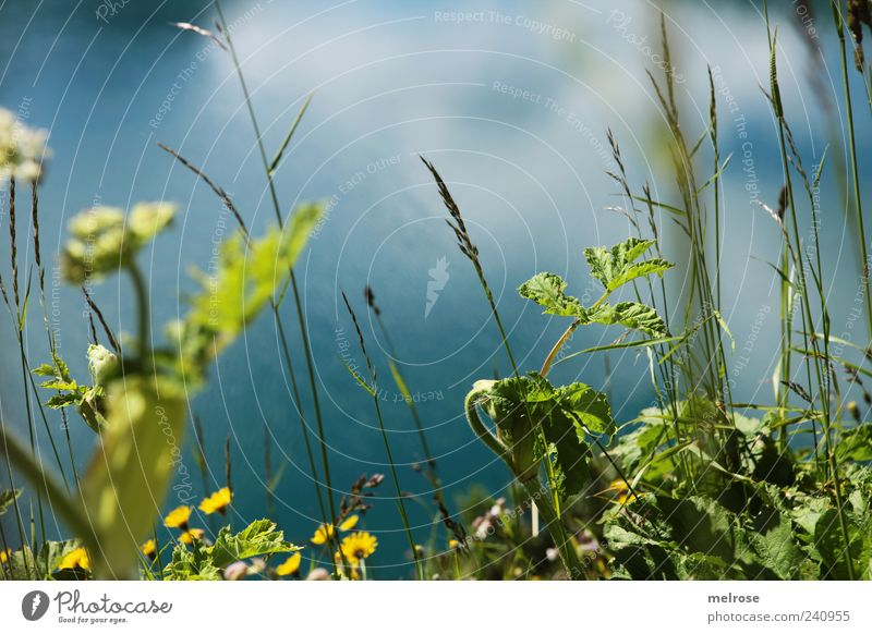 Nature Blue Water Green Plant Summer Flower Leaf Yellow Grass Lakeside Foliage plant Wild plant Meadow Reflection