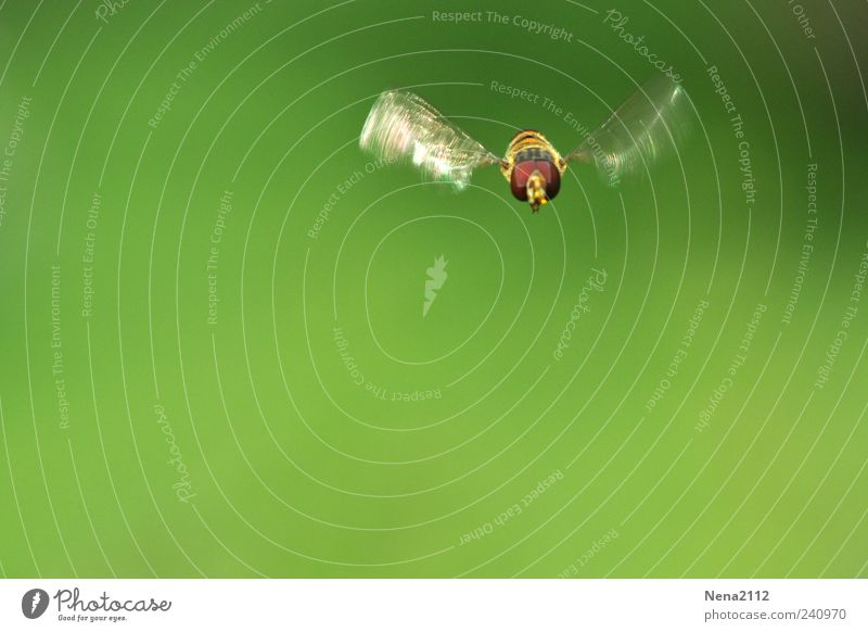 Free like a bee Nature Animal Wing 1 Flying Green Insect Hover Colour photo Exterior shot Close-up Macro (Extreme close-up) Aerial photograph Deserted