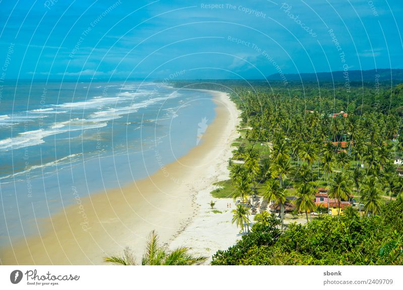 Bahia, Brazil Vacation & Travel Beach Weather Beautiful weather Waves Coast ocean water tropical vacation palm tree South America Colour photo Exterior shot