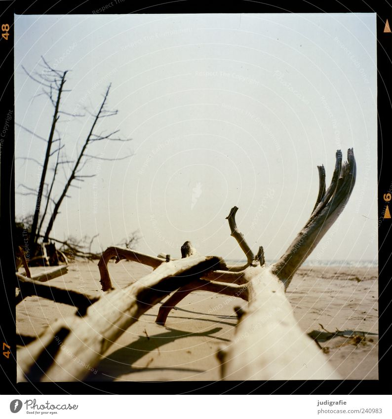 western beach Environment Nature Landscape Plant Sand Sky Tree Coast Beach Baltic Sea Ocean Darss Western Beach To dry up Natural Dry Moody Transience Change