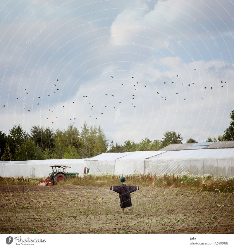 acre Sky Clouds Summer Plant Tree Field Tractor Bird Flock Scarecrow Greenhouse Colour photo Exterior shot Deserted Day