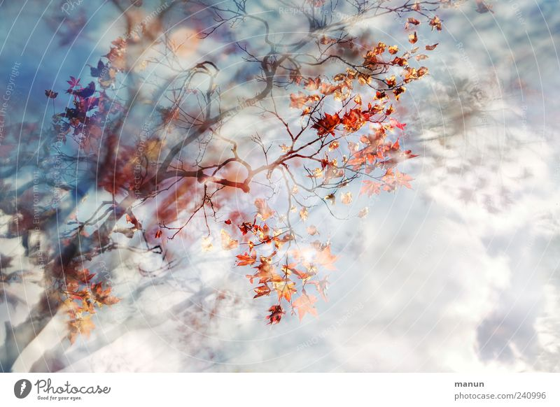 Sky Nature Blue Beautiful Tree Red Summer Leaf Clouds Spring Exceptional Natural Fantastic Abstract Picturesque Maple tree