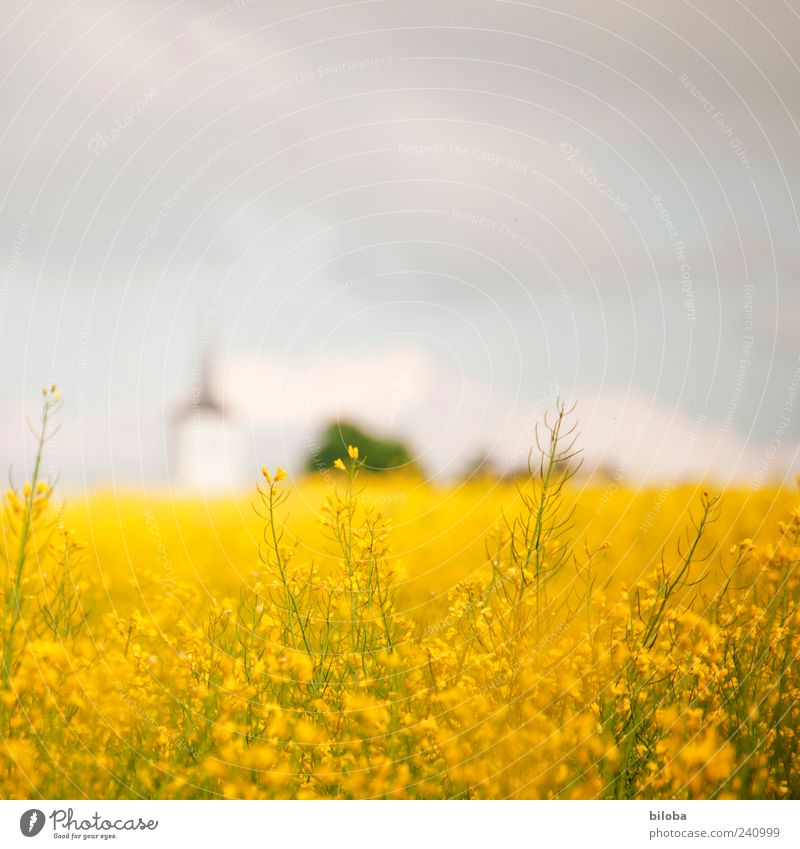 National Church II Plant Sky Summer Agricultural crop Field Deserted Tower Blue Yellow Colour photo Copy Space top Blur Church spire