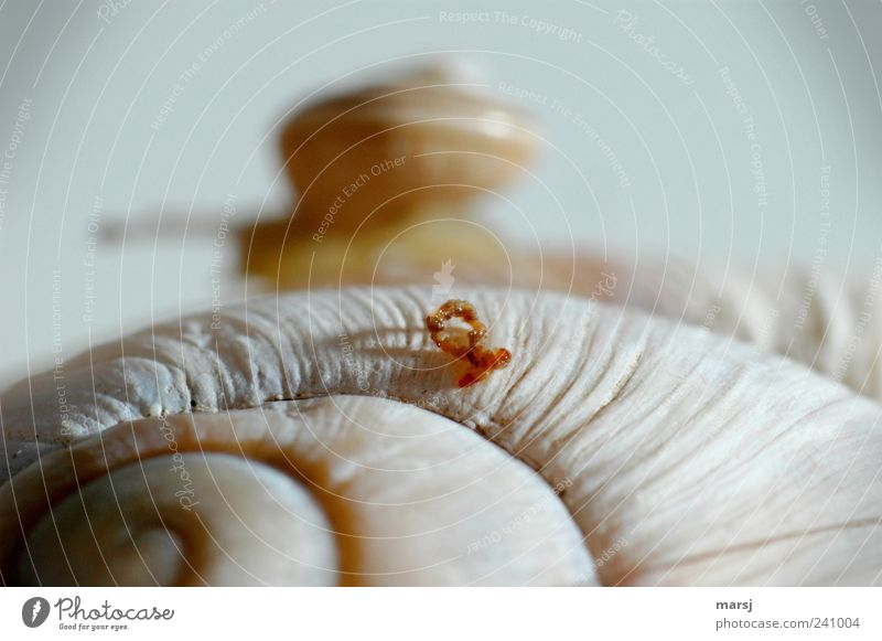 I don't war´s... or already? Nature Animal Wild animal Snail Vineyard snail Large garden snail shell 1 Baby animal Bow Movement Exceptional Thin Disgust Small