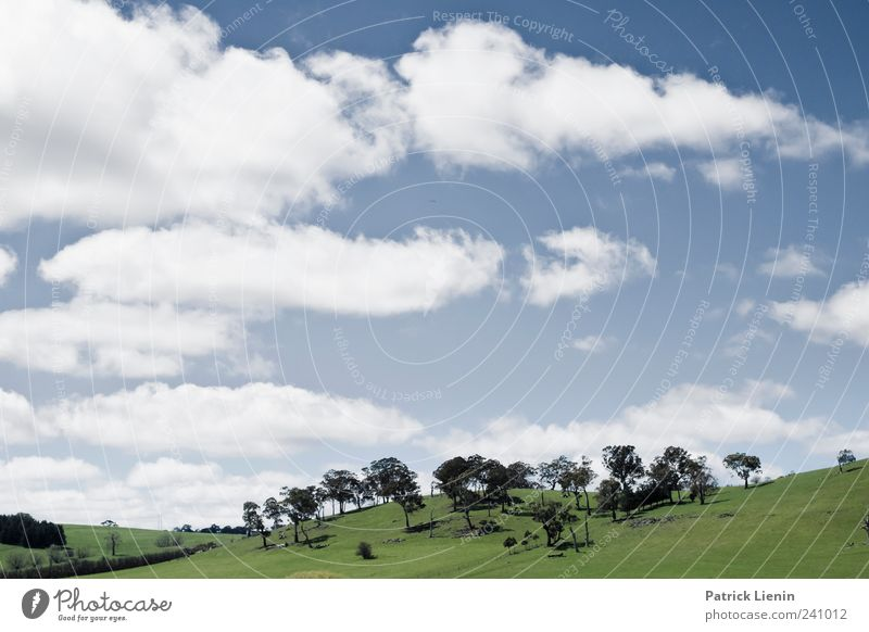 Sky Nature Vacation & Travel Beautiful Tree Plant Summer Clouds Environment Landscape Meadow Air Weather Travel photography Tourism Elements