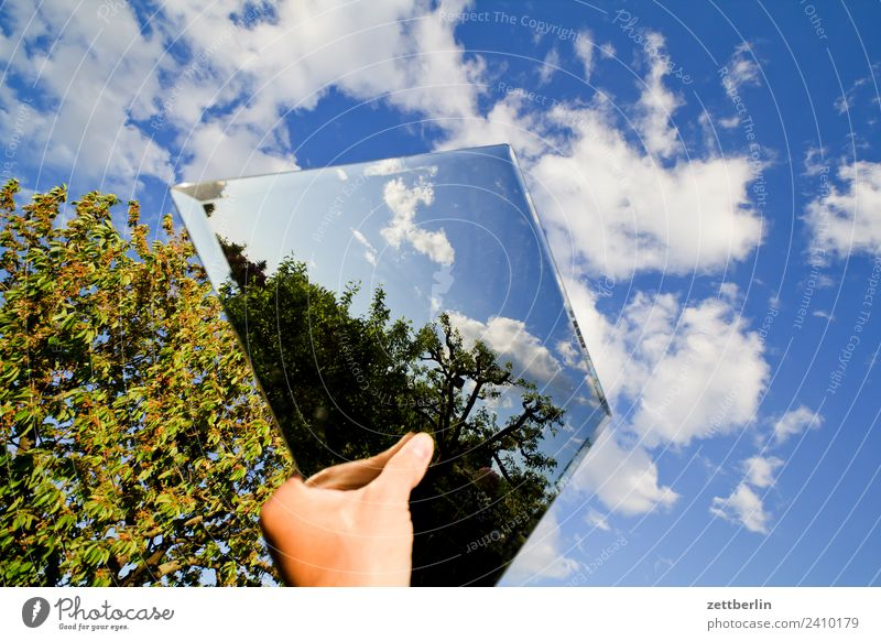 Mirrors in the sky Mirror image Reflection Hand To hold on Branch Tree Relaxation Garden Sky Heaven Garden plot Garden allotments Nature Plant Summer Copy Space