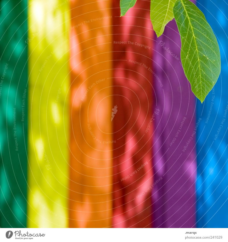 leaf Plant Leaf Foliage plant Wall (barrier) Wall (building) Wood Stripe Simple Bright Beautiful Multicoloured Colour Prismatic colors Spectral Illuminate