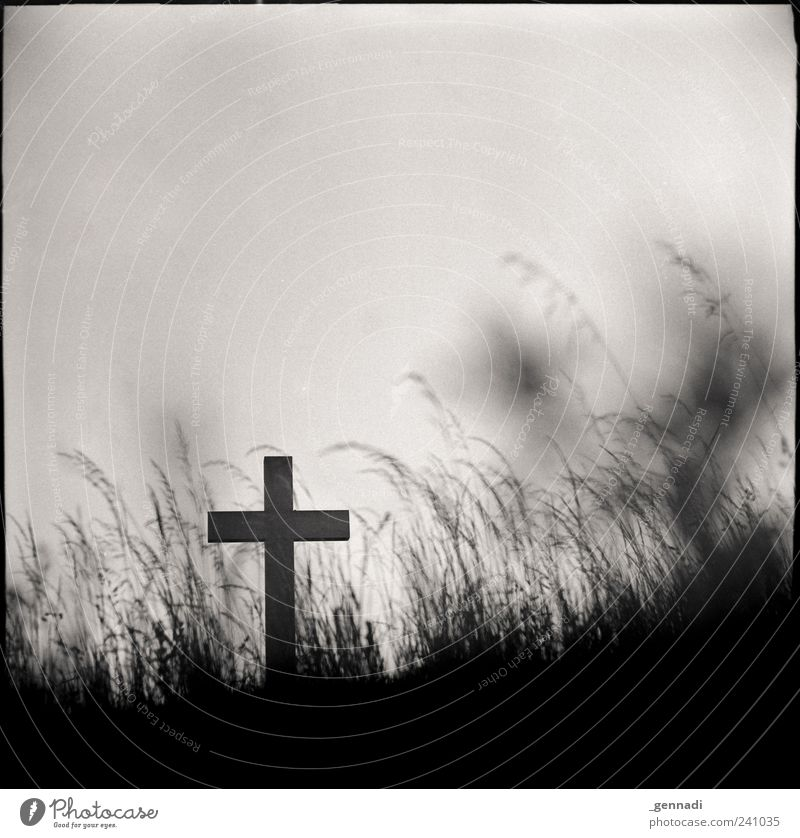find peace Elements Earth Cloudless sky Grass Authentic Historic Crucifix Christianity Death Belief Holy Crucify Sadness Grief Grain Analog Frame Square End