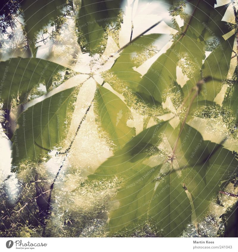 Nature Green Beautiful Tree Plant Leaf Yellow Warmth Emotions Moody Brown Glittering Exceptional Fresh Growth Esthetic