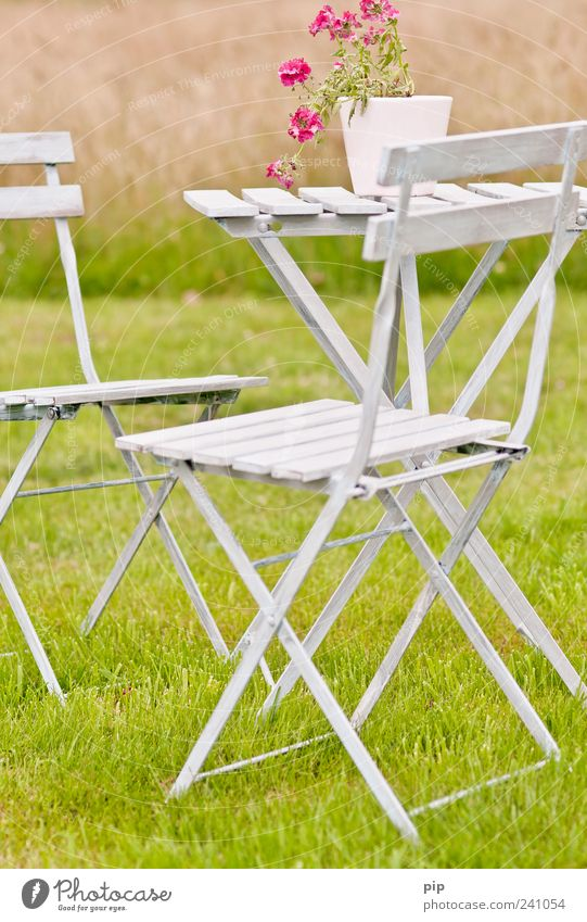Flower Green Summer Calm Relaxation Meadow Blossom Grass Garden Park Pink Table Chair Leisure and hobbies Living or residing Idyll